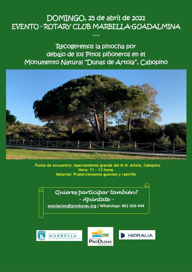"""[25 Abr 2021] RECOGIDA DE PINOCHA EN EL M.N. """"DUNAS DE ARTOLA"""" (Excursiones y visitas, Medioambiente)"""