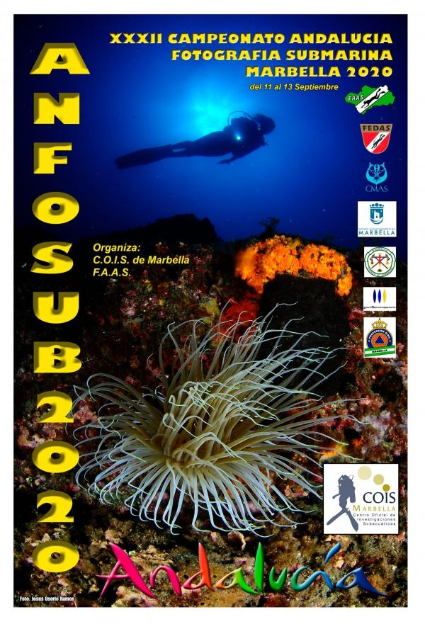 Marbella acoge este fin de semana el XXXII Campeonato de Andalucía de Fotografía Submarina que organiza el Centro Oficial de Investigaciones Subacuáticas