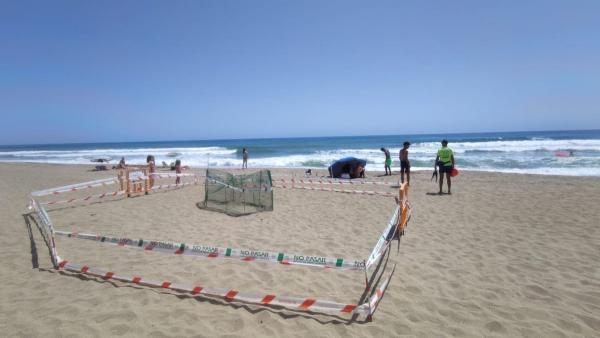 Cerca de 200 voluntarios cubren todas las plazas del dispositivo especial de supervisión del nido de una tortuga boba en una playa de Marbella